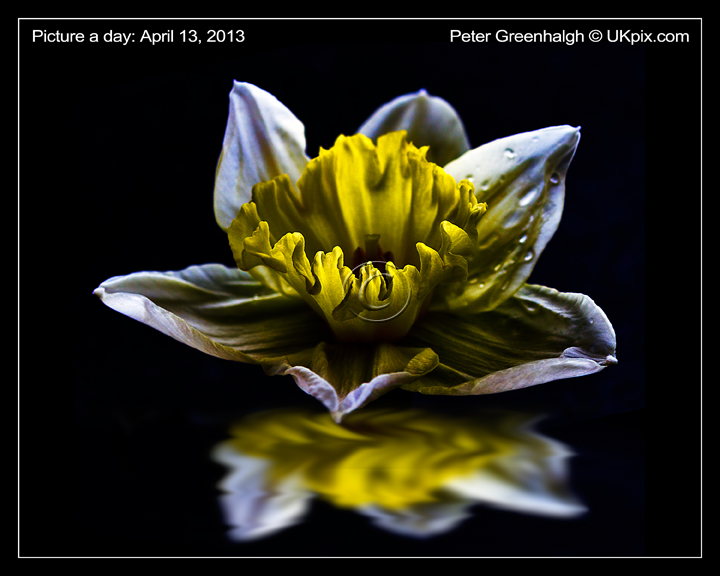 pic a day 2013 - 103 - Peter Greenhalgh