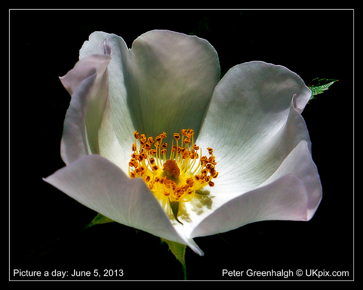 pic a day 2013 - 156 - Peter Greenhalgh