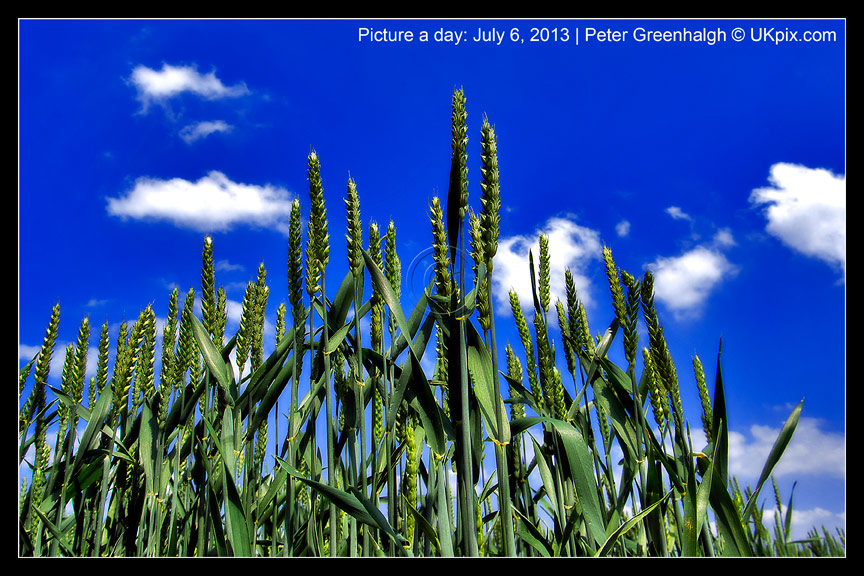 pic a day 2013 - 187 - Peter Greenhalgh